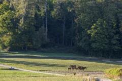 Agrarlandschaft am Abend