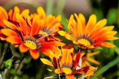 Mittagsblumen in der Sonne