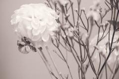 Blume muss nicht immer bunt sein