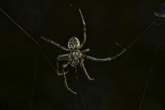 Im Web