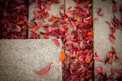 Herbstlich geometrisch