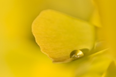 Gelb - Ginkgo im Herbst