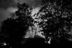 Nachtbäume