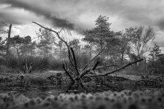 Oktober im Hohen Moor