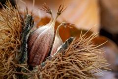 Braun - Kastanien im Herbst