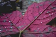 Der Herbst ist rot...