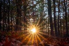 Tiefstehende Sonne
