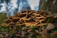 Pilz mit Beere