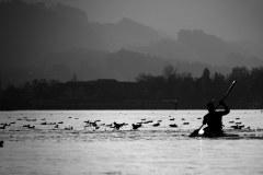 Wasserbewohner