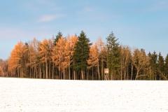 erster Schneefall