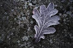 Blattfrost