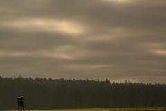 Babblfisch / Morgensonne