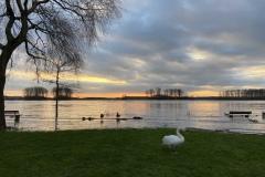Rheinkilometer 706 Hochwasseridylle