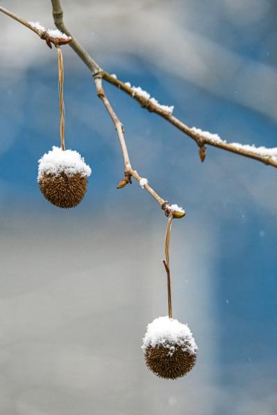 Schnee-Hütchen