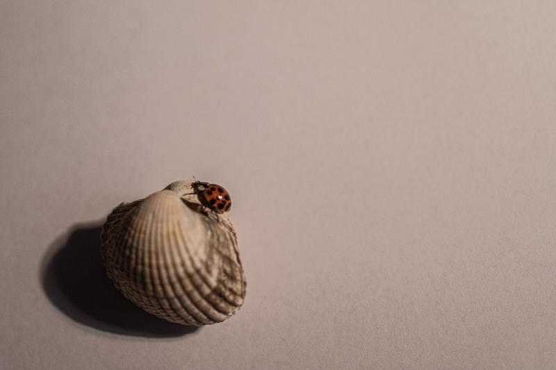 Käfer auf Ostseeurlaub