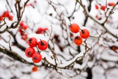 Farbkleckse im Winter