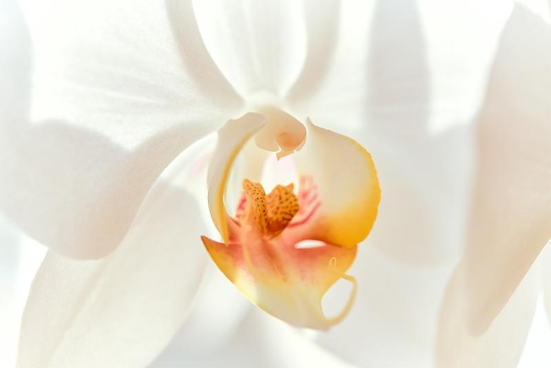 Orchidee die 2te