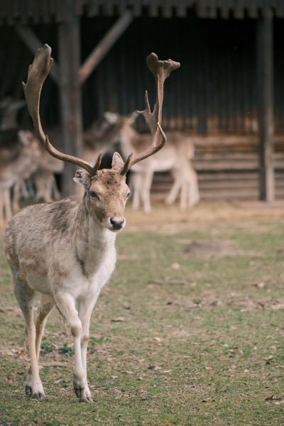Besuch im Wildpark