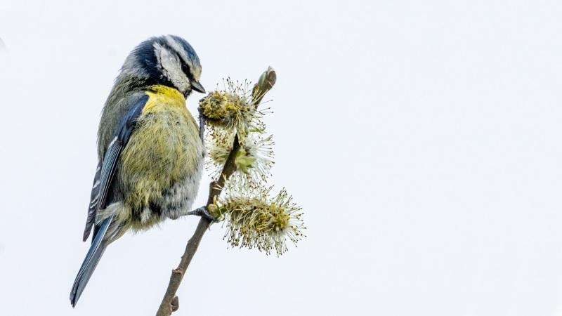 Achtbester Vogel des Jahres!