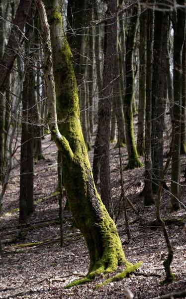 Ich glaube, ich stehe im Wald!