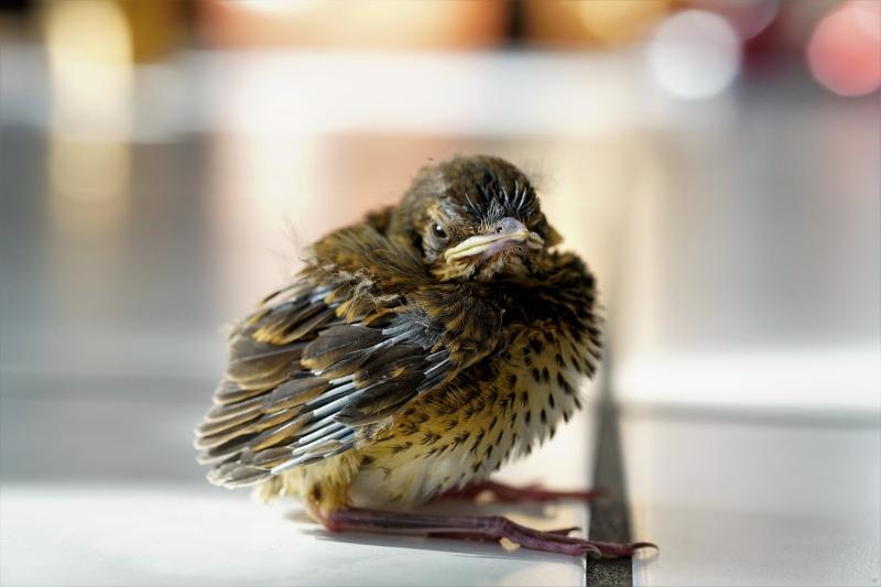 Aus dem Nest gefallen...