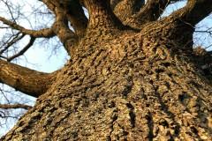Lieblinsbaum - neue Perspektive