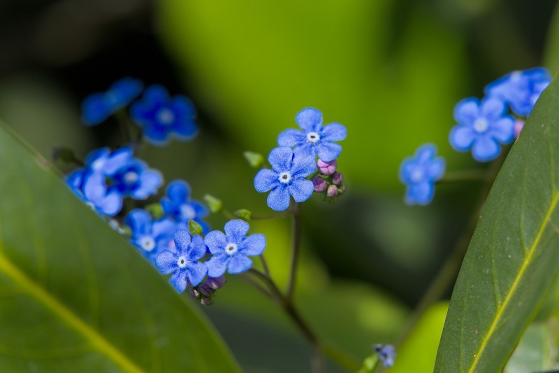 Frühlingszeit: Blüten