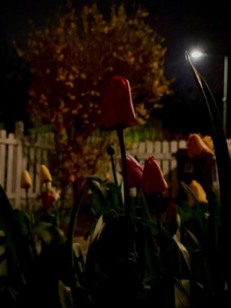 Blumen bei Nacht