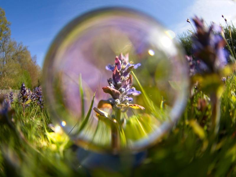 Günsel in der Kristallkugel