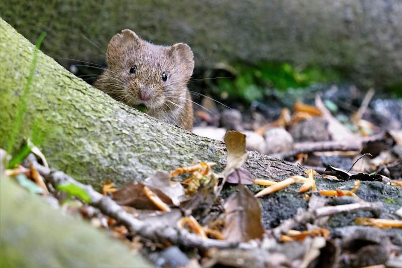 Neugieriges Mäuschen!