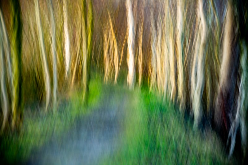 Weg in den Moorwald