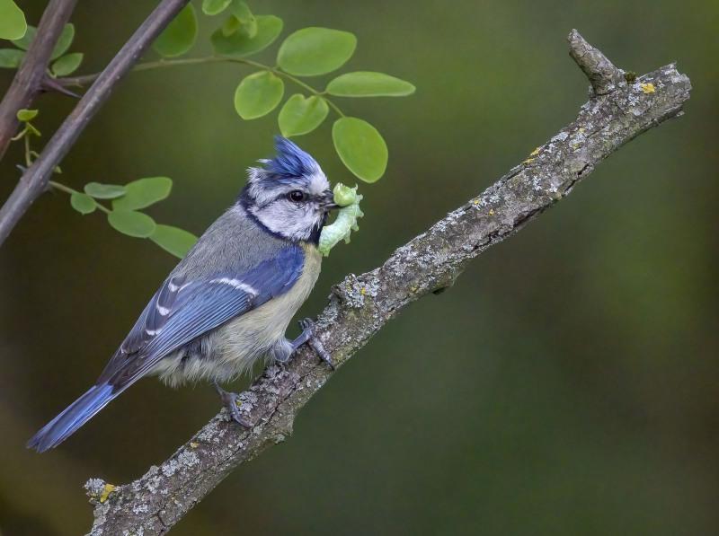 Der frühe Vogel höchstpersönlich!