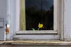 Einsamme Blume