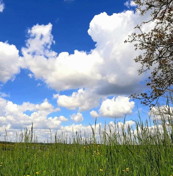 """Die Gedanken sind frei """"wer kann sie erraten?"""" Sie ziehen vorbei, in ganz kleinen Wolken :)"""