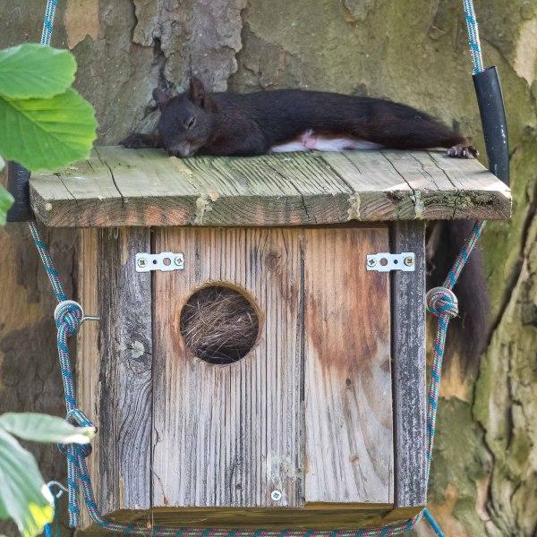 Müde Eichhörnchenmama