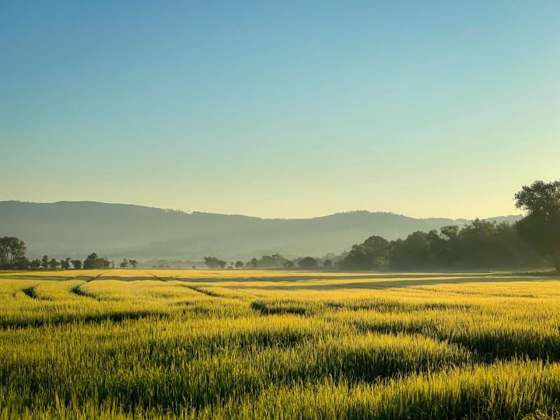 Morgensonne auf dem Land
