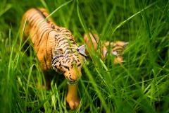 Tiger im Großstadt-Dschungel