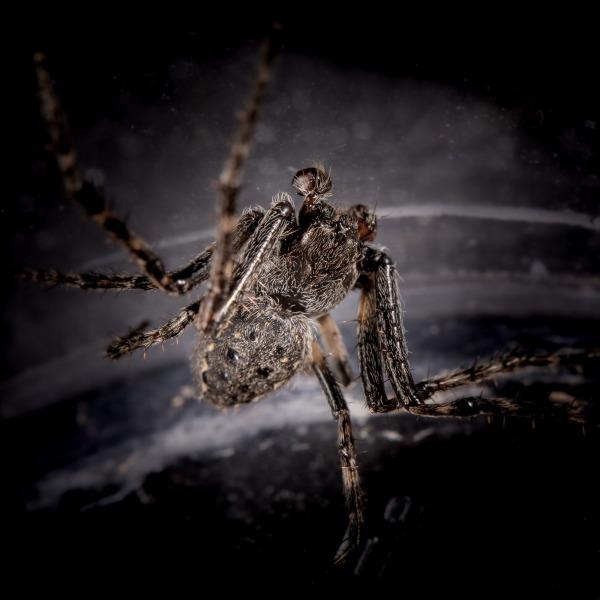 Hässlicher Spinnenmann