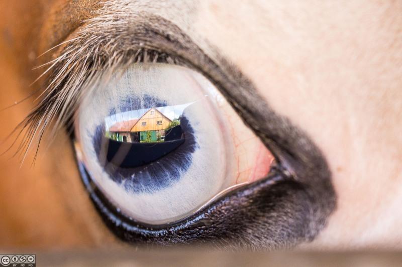 Im Auge des Pferdes spiegelt sich die Seele des Menschen