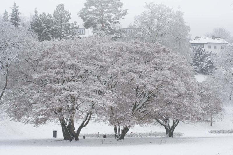 Winter auf dem Killesberg