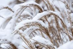 sonjahwolf / Gräser im Schnee
