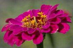 Blume in Blume