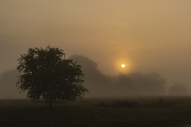 ...früh raus in den Nebel