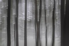 Waldschwenk