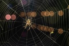 Spinnennetz bei Nacht