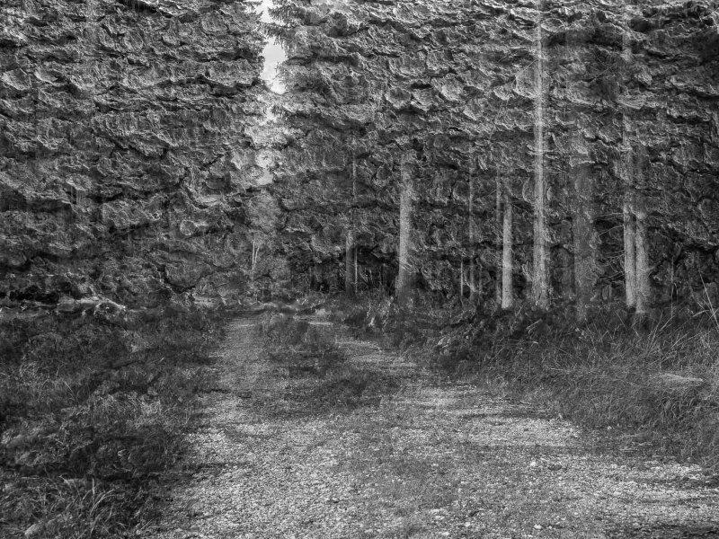 2. Wahl der Doppelbelichtung im Wald