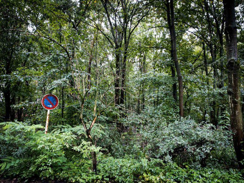 Schilde(r)Wald