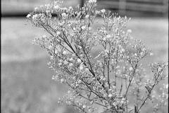 Zarte Pflanze