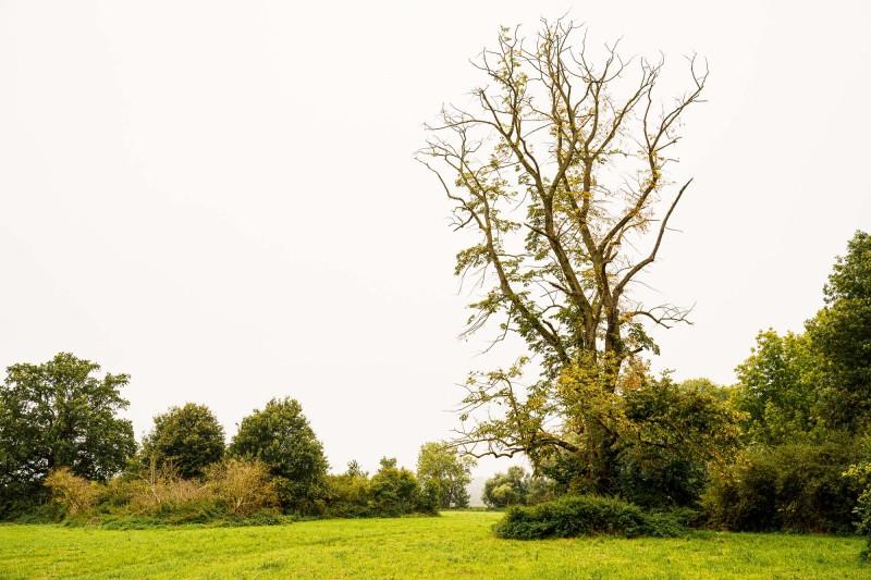 Baum Minimalismus