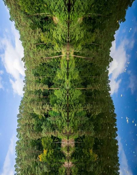 Reflected Wood